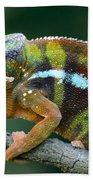 Panther Chameleon Chamaeleo Pardalis Beach Towel