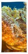 Papuan Scorpionfish Lying On A Reef Beach Towel
