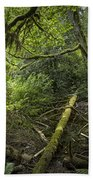 Rain Forest On Vancouver Island Beach Towel