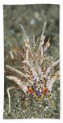 Rare Tiger Shrimp On Volcanic Sand Beach Towel