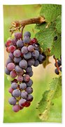 Red Grapes Beach Towel by Elena Elisseeva