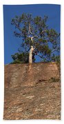 Red Pine Tree Beach Towel by Ted Kinsman