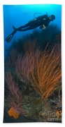 Red Whip Fan Coral With Diver, Papua Beach Towel