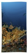 Reef Scene With Coral And Fish Beach Towel