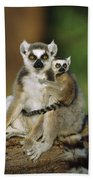 Ring-tailed Lemur Mother And Baby Beach Towel