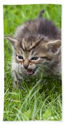 Small Kitten In The Grass Beach Towel