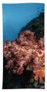 Soft Coral Seascape,  Indonesia Beach Sheet