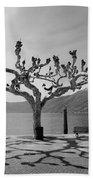 sycamore trees in Ascona - Ticino Beach Towel