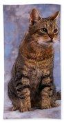 Tabby Cat Portrait Of A Cat Beach Towel
