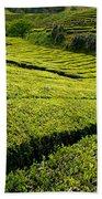 Tea Gardens Beach Sheet