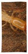Termite Beach Towel