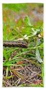 Tersa Sphinx Caterpillar Beach Towel