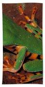 Tiger-striped Monkey Frog Beach Towel