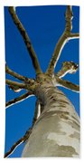 Tree With Branches Beach Towel