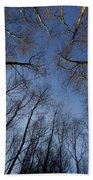 Trees In Epping Forest Beach Towel