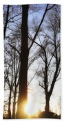 Trees With Sunlight Beach Towel