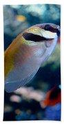 Tropical Fish Beach Towel