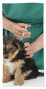 Vet Giving Pup Its Primary Vaccination Beach Towel