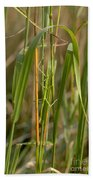 Walking Stick Insect Beach Towel by Ted Kinsman