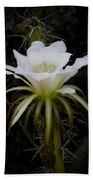 White Echinopsis Flower  Beach Sheet