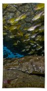 Wobbegong Shark And Cardinalfish, Byron Beach Towel