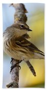 Yellow-rumped Warbler Beach Sheet