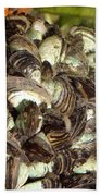 Zebra Mussels Dreissena Polymorpha Beach Towel