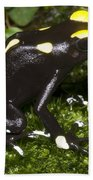Dyeing Poison Frog Beach Towel