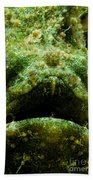 Frogfish Beach Towel