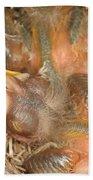 Newborn Robin Nestlings Beach Towel