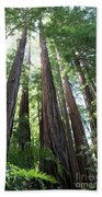 Redwoods Sequoia Sempervirens Beach Towel