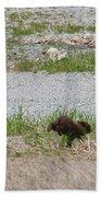 Black Bear Family Beach Towel