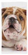 Bulldog Pup Beach Towel