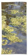 Algae Bloom In A Pond Beach Towel by Photo Researchers, Inc.