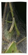 Bird-cherry Ermine Caterpillars Beach Towel