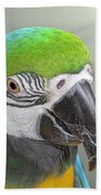 Blue And Yellow Macaw Beach Towel