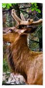 Browsing Elk In The Grand Canyon Beach Sheet