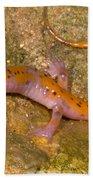 Cave Salamander Beach Towel