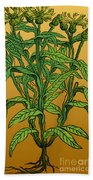 Centaurea Montana, Bachelors Button Beach Towel