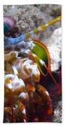 Close-up View Of A Mantis Shrimp, Papua Beach Towel