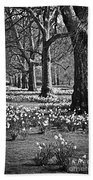 Daffodils In St. James's Park Beach Towel