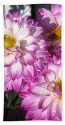 Dahlia Named Pink Bells Beach Towel