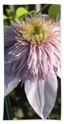 Double Clematis Named Empress Beach Towel