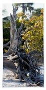 Driftwood On The Beach Beach Towel