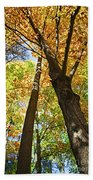 Fall Forest Beach Towel
