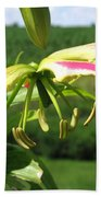 Gloriosa Named Rothschildiana Beach Towel