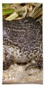 Gopher Frog Beach Towel