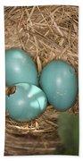 Hatching Robin Nestlings Beach Towel