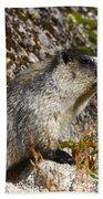 Hoary Marmot Beach Towel