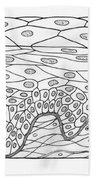 Illustration Of Stratified Squamous Beach Towel